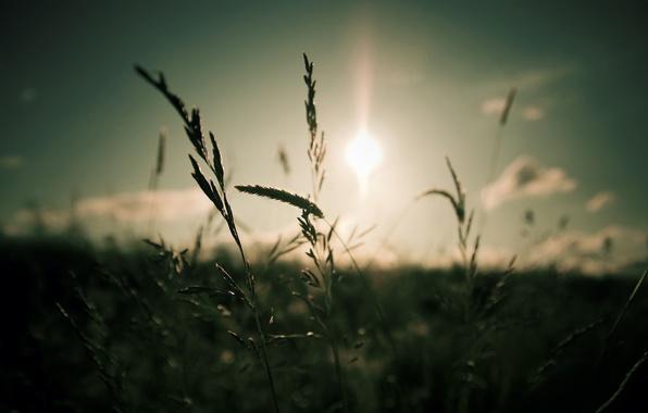 Картинка небо, трава, солнце, облака, макро, свет, природа, фокус, light, grass, sky, nature, 1920x1200, clouds, macro, ...