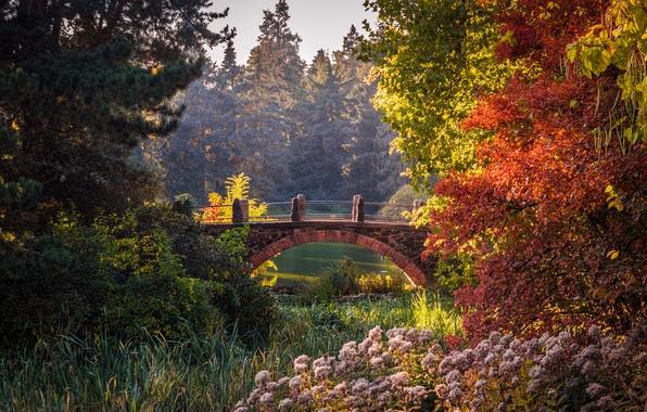 Картинка осень, деревья, мост, пруд, парк, красота, Германия, кусты, Берлин, сады, Botanical Garden