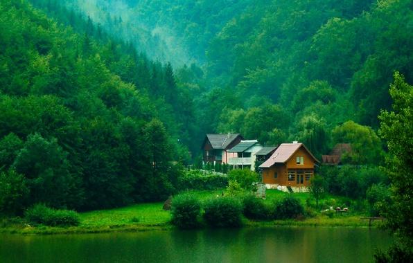 Картинка зелень, лес, деревья, река, домики, кусты