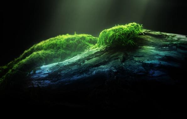 Картинка лес, макро, свет, природа, зеленый, дерево, green, мох, light, forest, wood, macro, moss