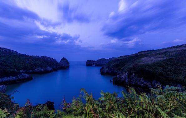 Картинка море, скалы, бухта, залив, Испания, папоротник, Spain, Бискайский залив, Cantabria, Кантабрия, Bay of Biscay, Валь-де-Сан-Висенте, …