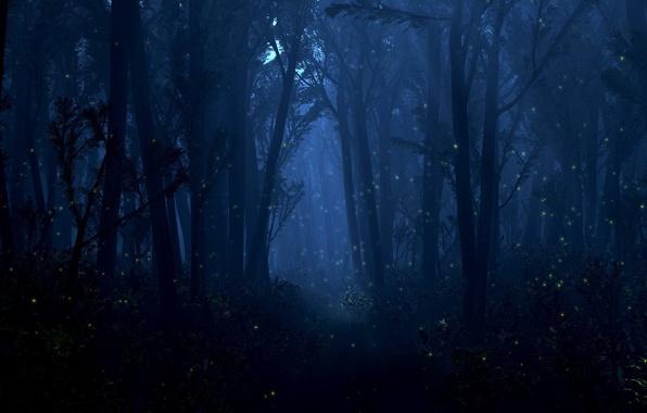 Картинка лес, свет, деревья, ночь, светлячки, огоньки