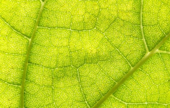 Картинка green, macro, leaf
