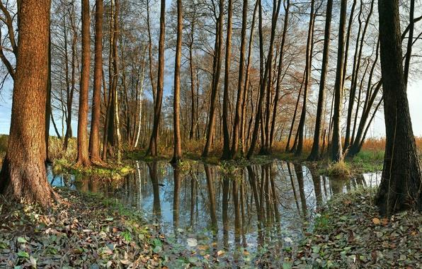 Картинка осень, листья, вода, деревья, природа, листва, германия