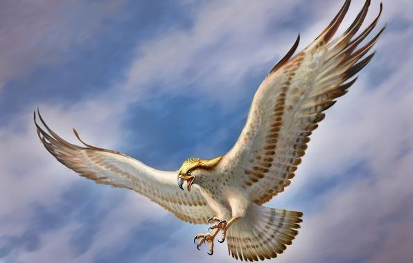 Картинка небо, птица, крылья, арт, сокол