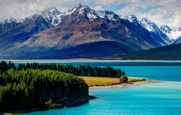 Картинка лес, деревья, горы, озеро, Новая Зеландия, New Zealand, Lake Tekapo, Текапо