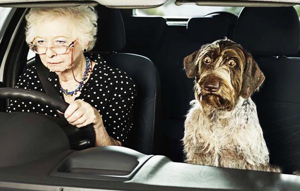 Картинка Собака, Юмор, Машина, Глаза, Бабушка, Dog, Machine, Eyes, Funny, Humor, Выпучила, Grandmother, Puffed, Прикол
