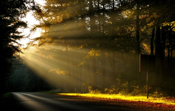 Картинка дорога, лес, солнце, лучи, деревья, природа, рассвет, утро
