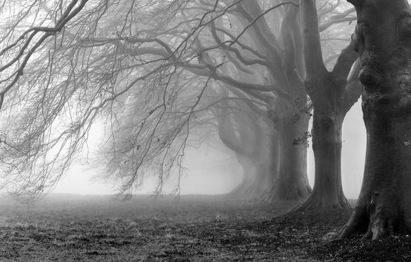 Картинка деревья, ветки, туман, фото, фон, ветви, обои, белое, черное, wallpapers