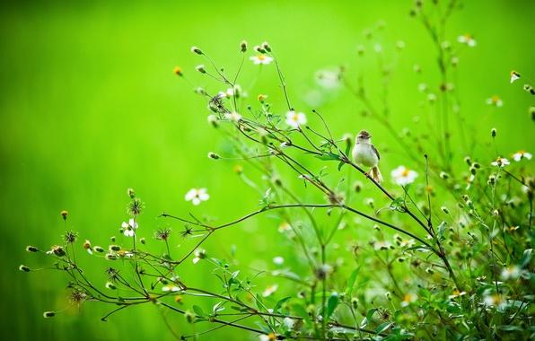 Картинка лето, ветки, природа, птица