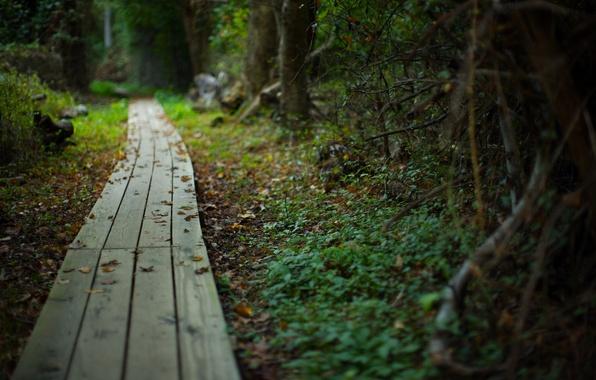 Картинка дорога, лес, лето, природа, красота, растения, тропинка