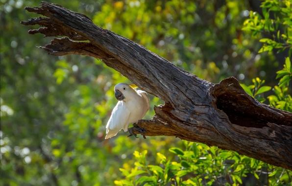 Фото обои боке, дерево, зелень, попугай, птица