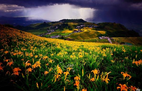 Картинка поле, пейзаж, цветы, тучи, лилии, вид, дома, луг, постройки, поселение