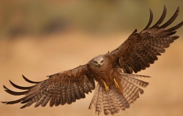 Герб города орел фото  animalsfotocom