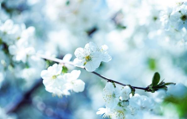 Картинка цветок, макро, природа, flowers macro photos
