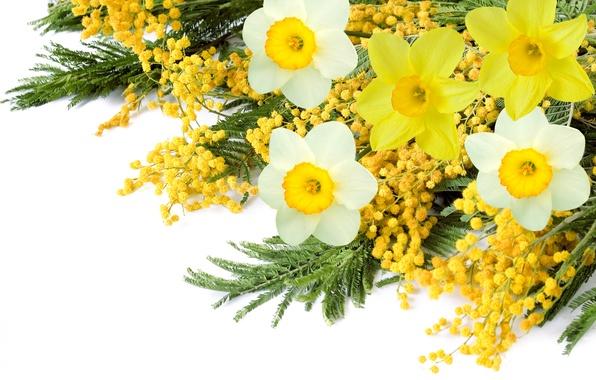 Где в москве купить цветы мимозы цветы в вазонах купить минск