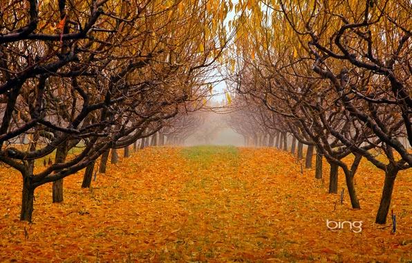 Картинка осень, листья, деревья, туман, парк, сад, british columbia, canada, okanagan valley