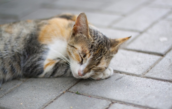 Картинка кошка, кот, лапа, сон, рыжий, спит, лежит, пятнистый