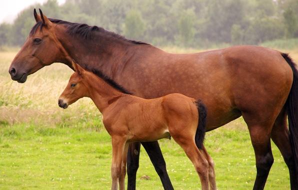 Картинка лошадь, жеребенок, гнедая