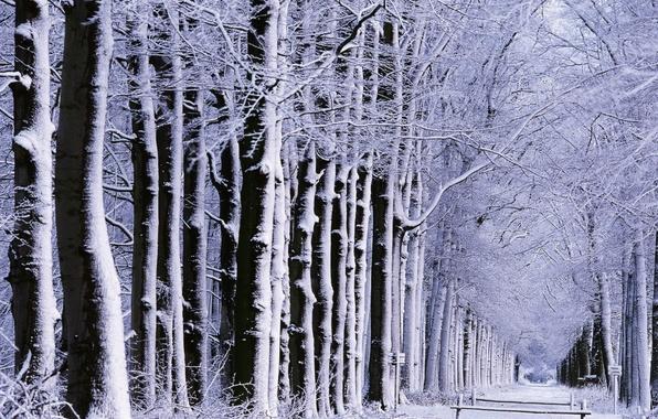 Картинка зима, дорога, лес, снег, деревья, природа, настроение, настроения, зимние, дороги, аллея, парки, аллеи