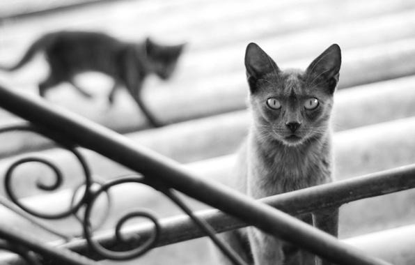 Картинка кошка, кот, котенок, серый, тень, размытость, силуэт, перила, ступени, черно-белое, cat