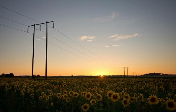 Картинка поле, небо, солнце, облака, подсолнухи, закат, природа, провода, вечер, опоры, Швеция