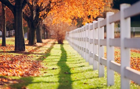 Картинка зелень, осень, трава, листья, солнце, макро, деревья, фон, дерево, обои, забор, тень, ограда, ограждение, день, …