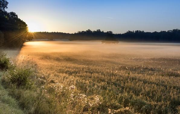 Картинка поле, свет, туман, утро