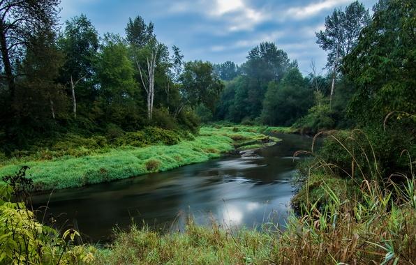 Картинка лес, небо, трава, деревья, пейзаж, река, Canada, British Columbia, канада, кусты