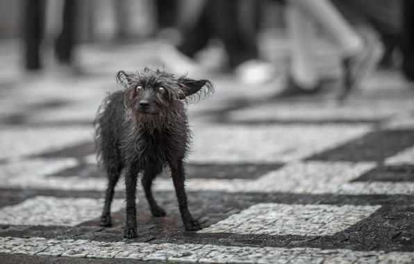 Картинка взгляд, одиночество, страх, улица, собака