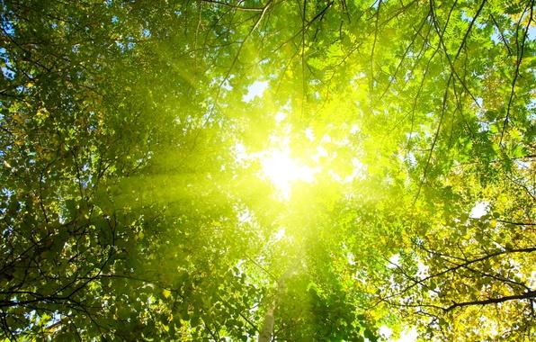 Картинка лес, солнце, лучи, свет, деревья, природа, парк, утро
