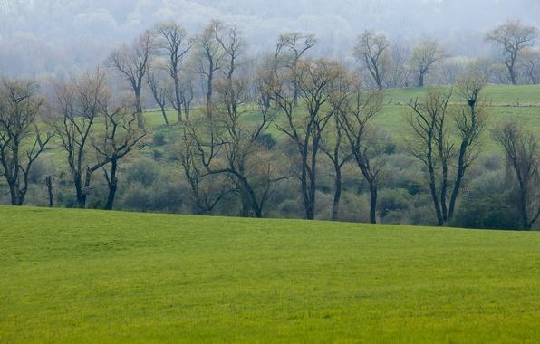 Картинка зелень, поле, лес, трава, деревья, весна, луг