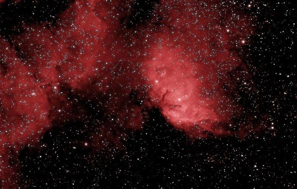 Фото обои Tulip Nebula, туманность, космос, эмиссионная