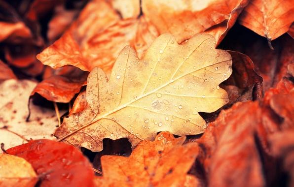 Картинка осень, листья, капли, макро, природа, листок, желтые, оранжевые, бордовые