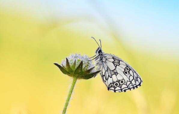 Картинка капли, роса, бабочка, растение