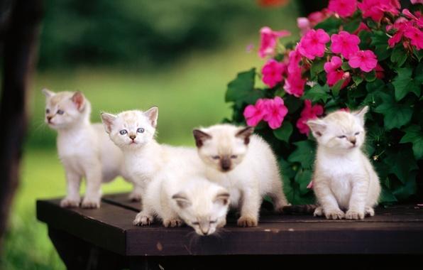 Картинка цветы, котята, малыши