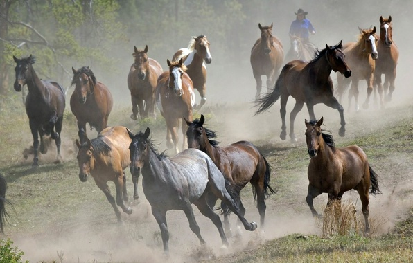 About Kathy Pike  The Academy for Coaching with Horses