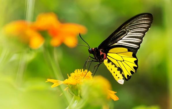 Картинка цветок, желтый, бабочка, размытость