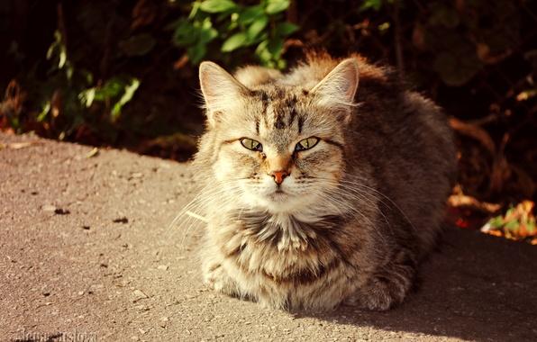 Картинка осень, кот, кошки, солнечный кот
