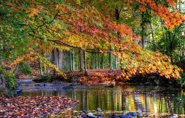 Картинка осень, лес, листья, вода, деревья, ручей, камни, желтые
