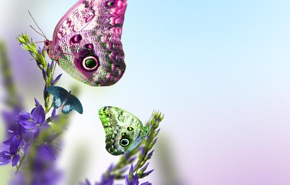 Картинка листья, цветы, свежесть, стебли, бабочка, красота, весна, голубые, blue, flowers, leaves, beauty, spring, Butterfly, нежное …