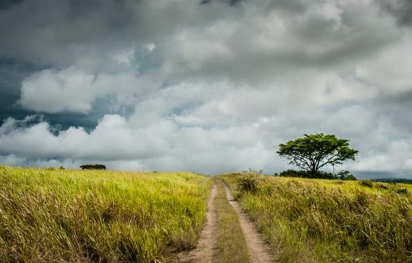 Картинка дорога, поле, облака, путь, дерево, фермы