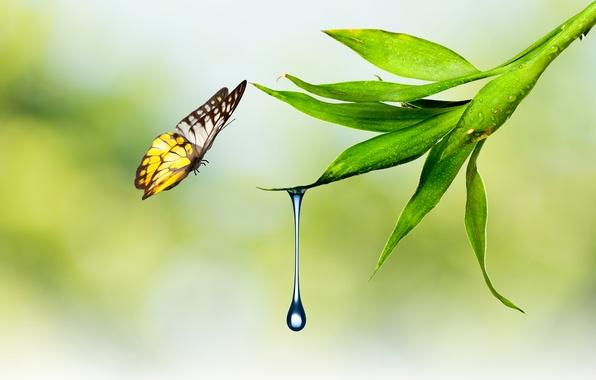 Картинка вода, природа, лист, бабочка, растение, капля, мотылек