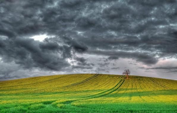 Картинка поле, небо, тучи, дерево, Англия, Великобритания, серое