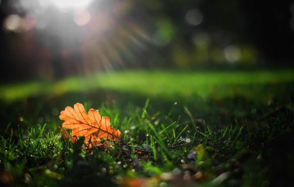 Картинка листья, макро, листик, листочек, nature, autumn, macro, leave