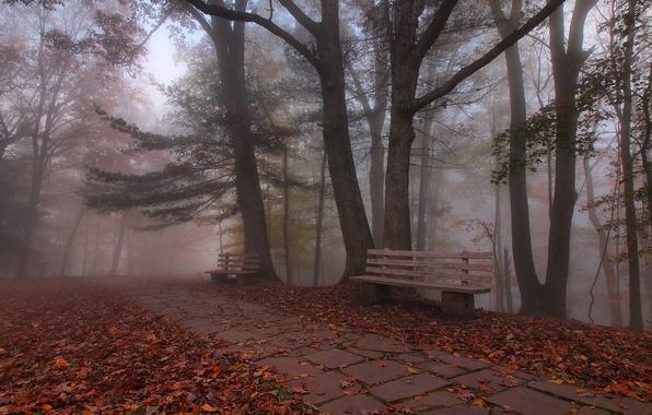 Картинка осень, парк, скамья