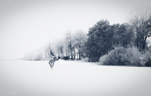 Картинка поле, природа, олень