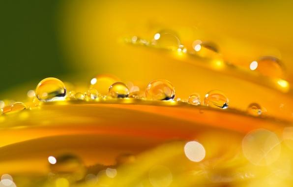 Картинка цветок, капли, оранжевый, блики, лепестки