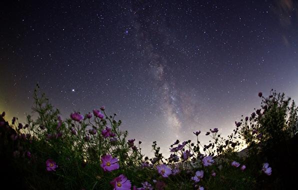 Картинка космос, звезды, цветы, ночь, пространство, млечный путь