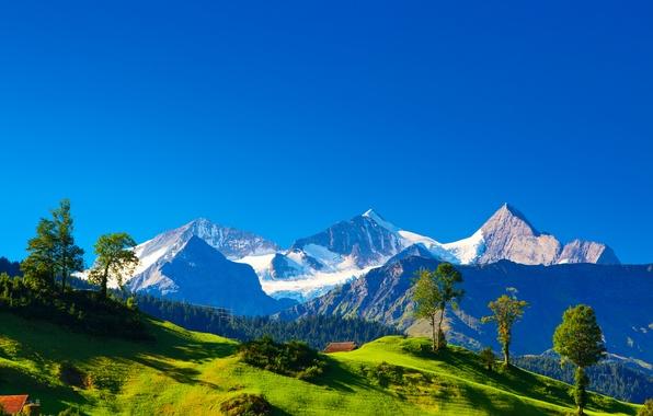 Картинка зелень, трава, деревья, пейзаж, горы, природа, холмы, Швейцария, Альпы, домики, Switzerland, Alpes, Alpen